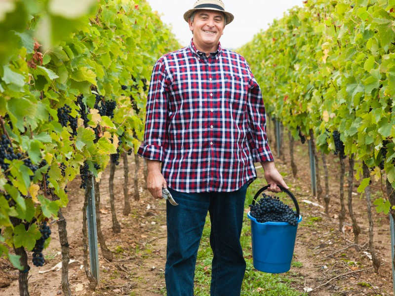 Man in vineyard