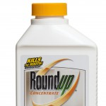 Bottle of RoundUp