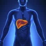Medical Imaging - Male Organs Liver