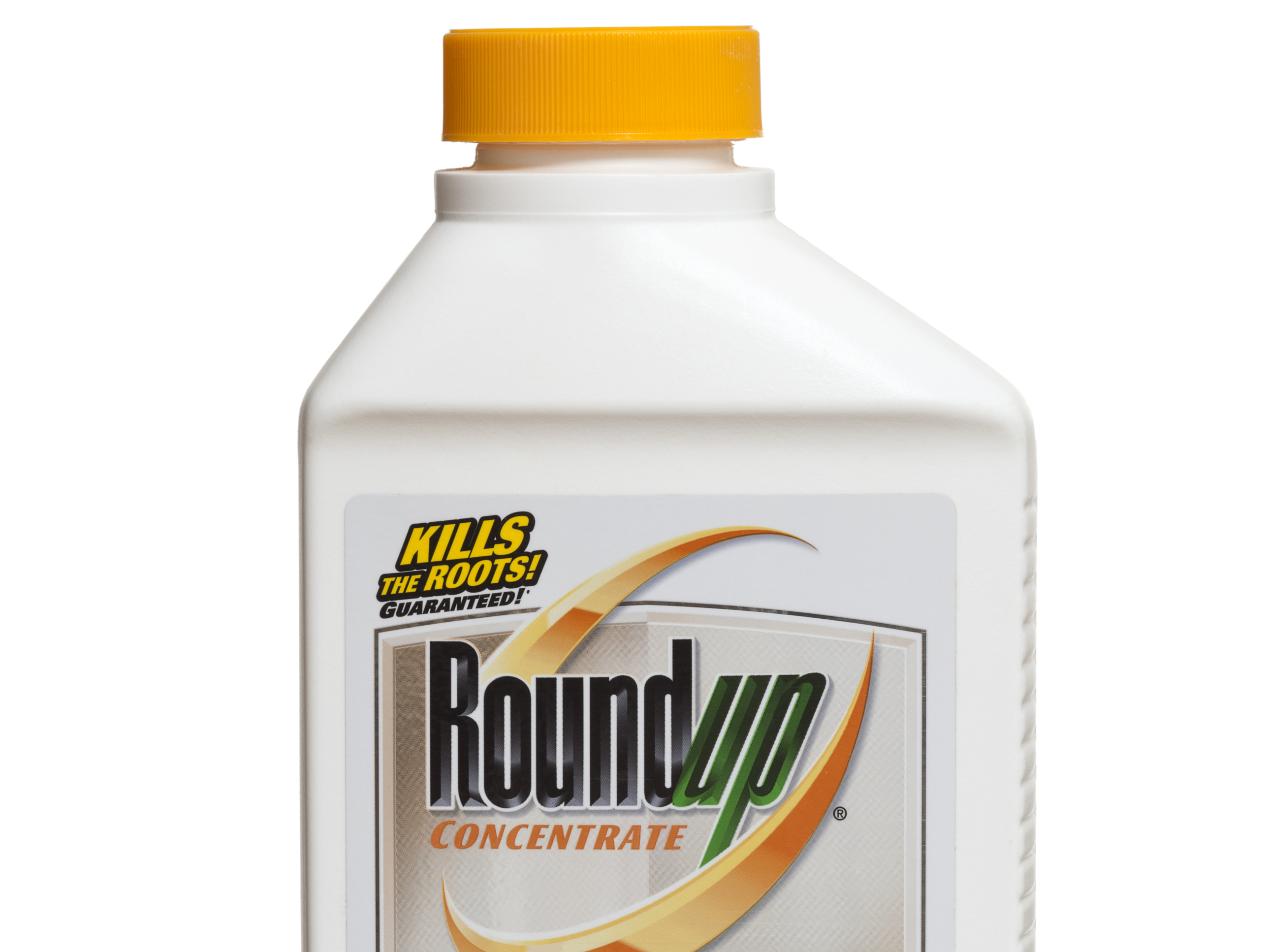 Glyphosate linked to birth defects in pigs