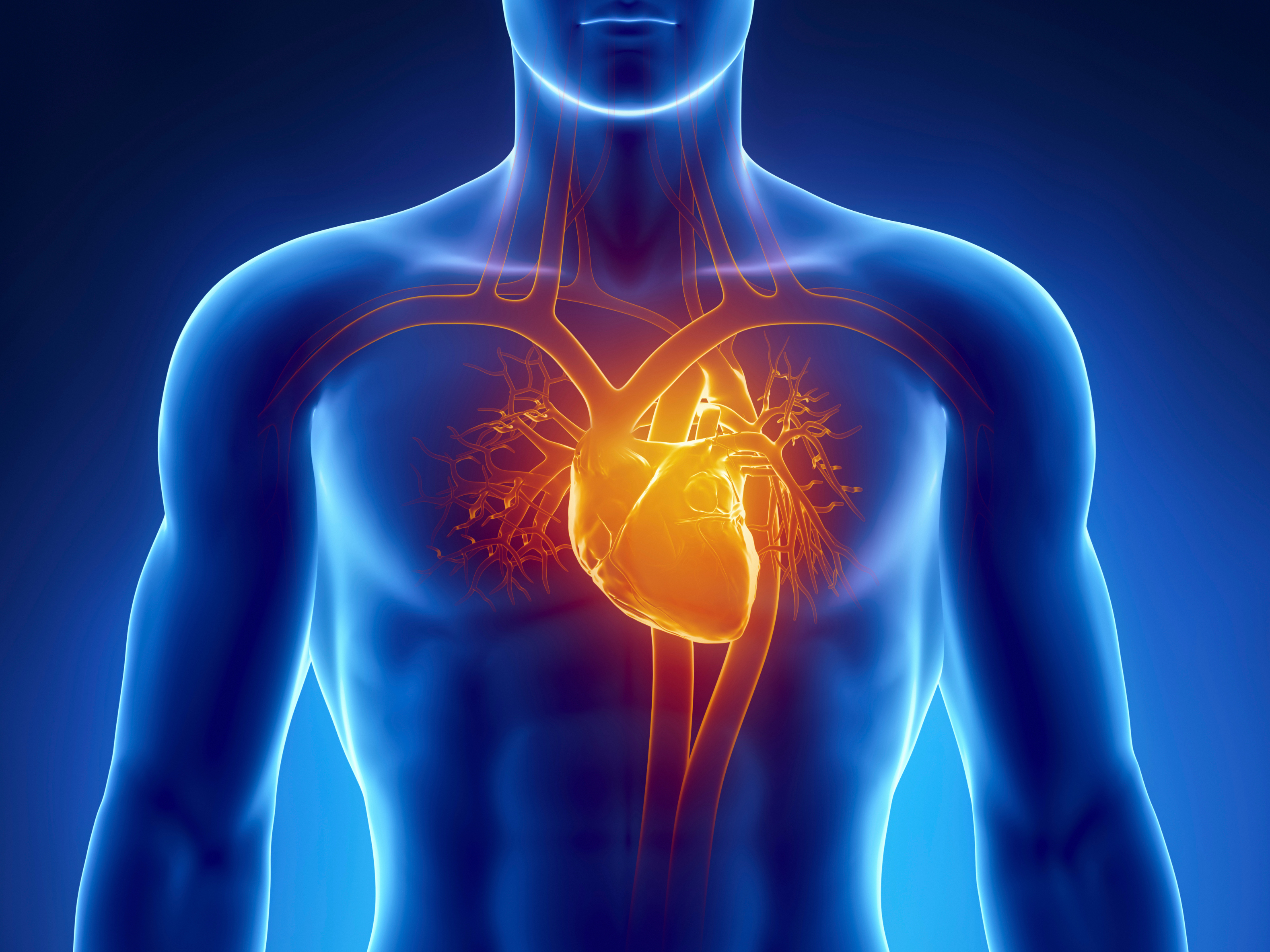 Is your cardiovascular system working overtime? - Easy Health Options®