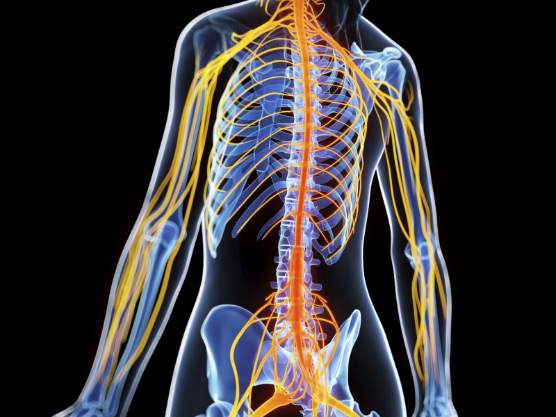 improve ms symptoms with whole body vibration therapy