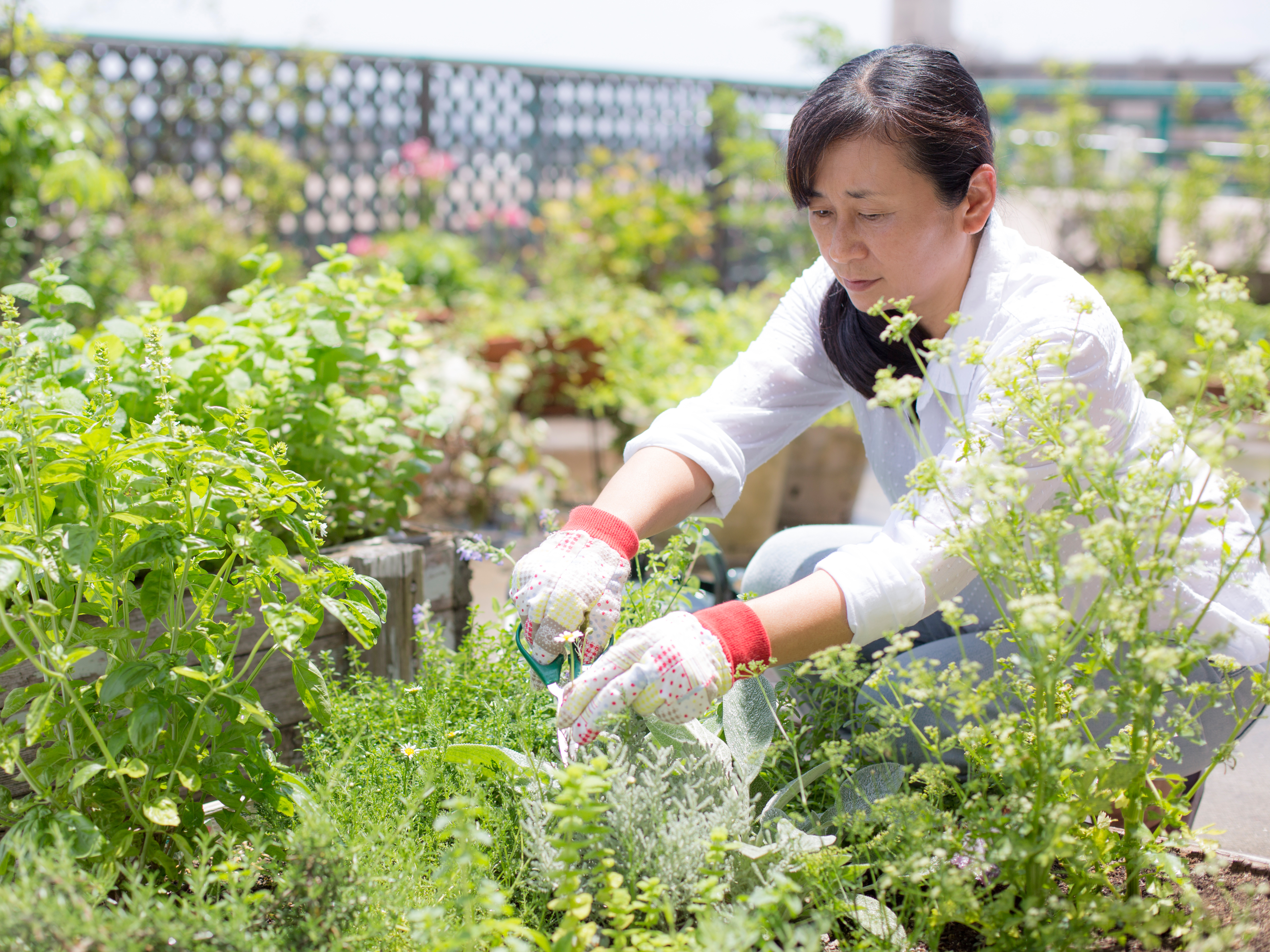 From garden to pharmacy — the cancer drug in your vegetables