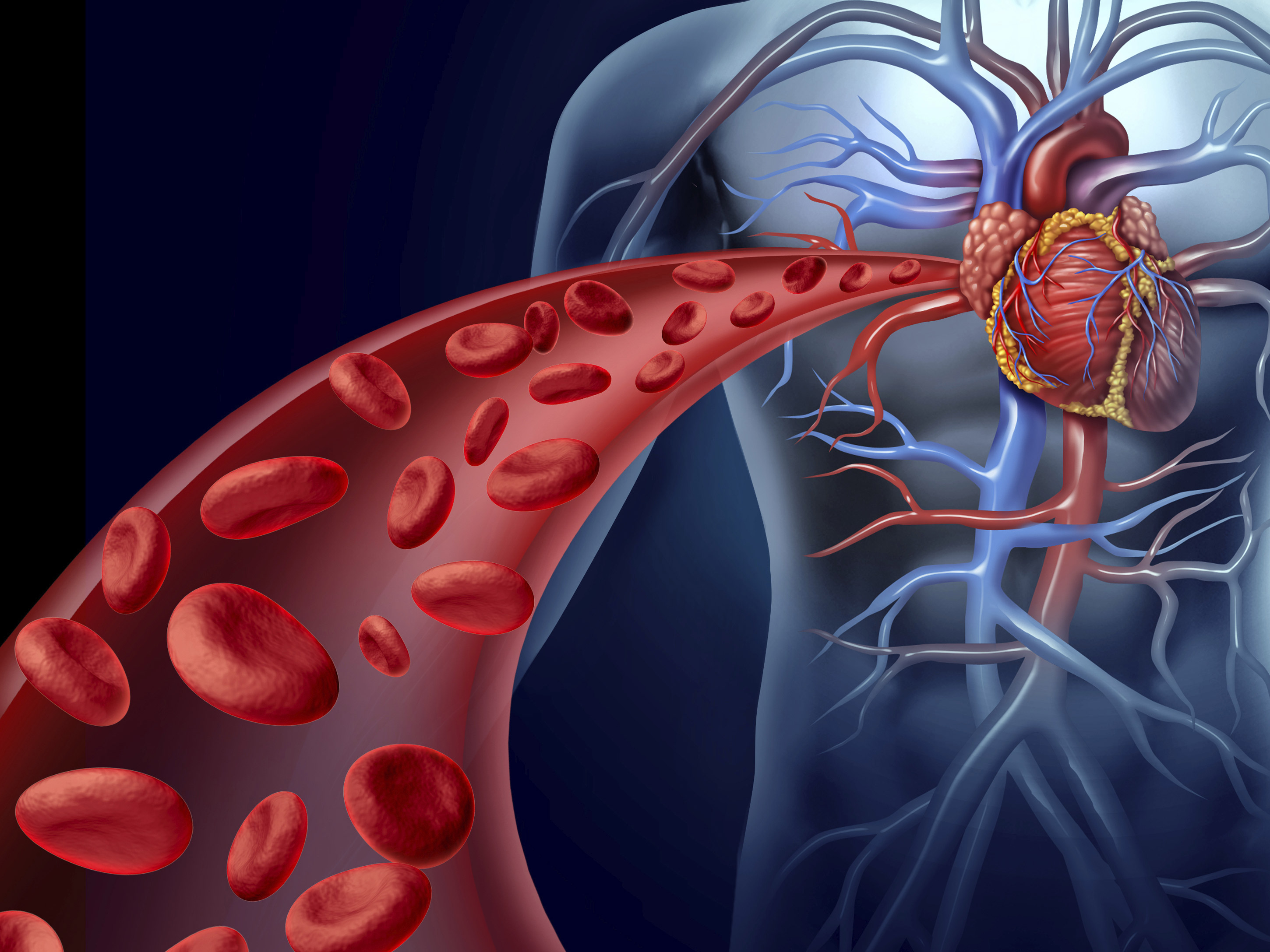 Five minute boost keeps your arteries loose