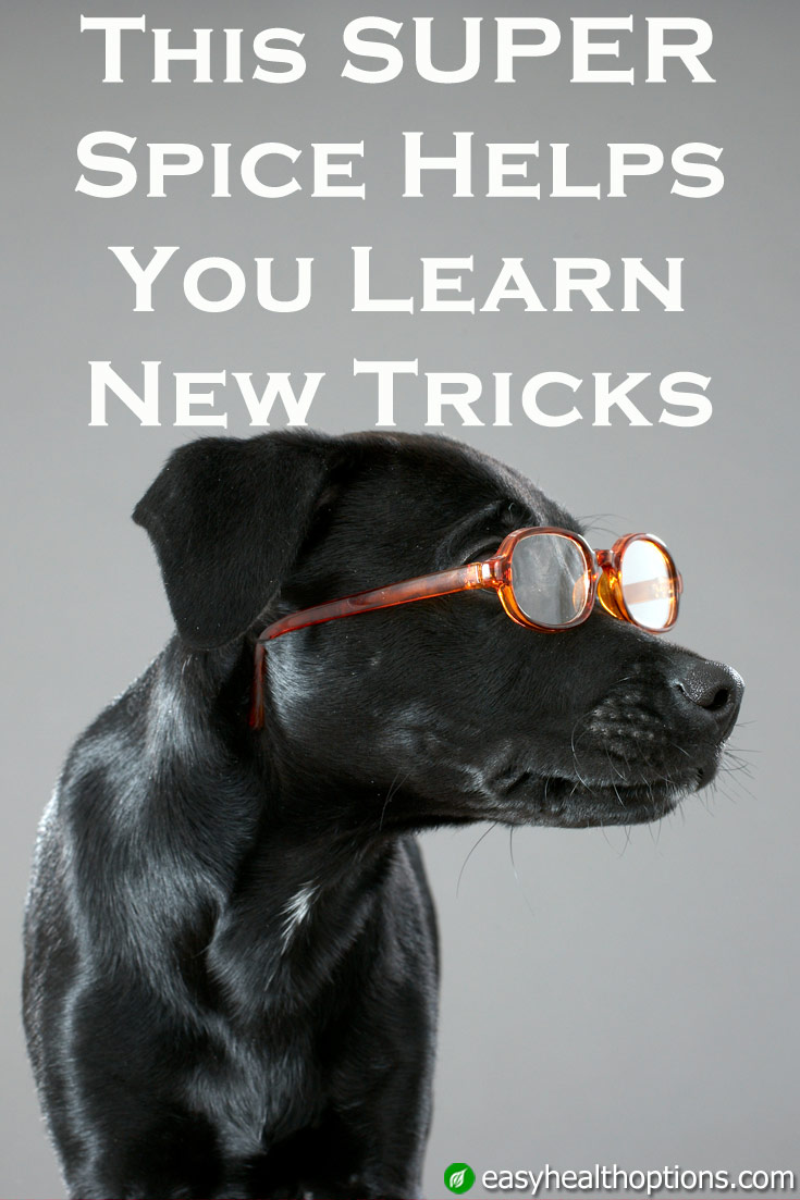 The Ultimate List Of Dog Trick Ideas - Success Dogs