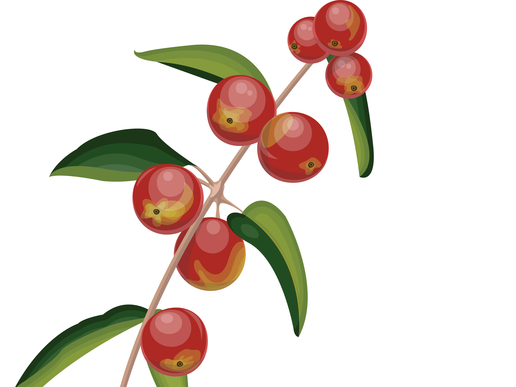 Fight colds and cancer with camu camu