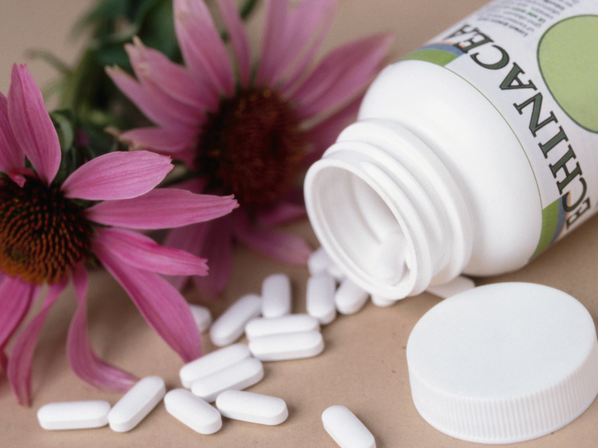 Echinacea: Potent remedy or costly risk?