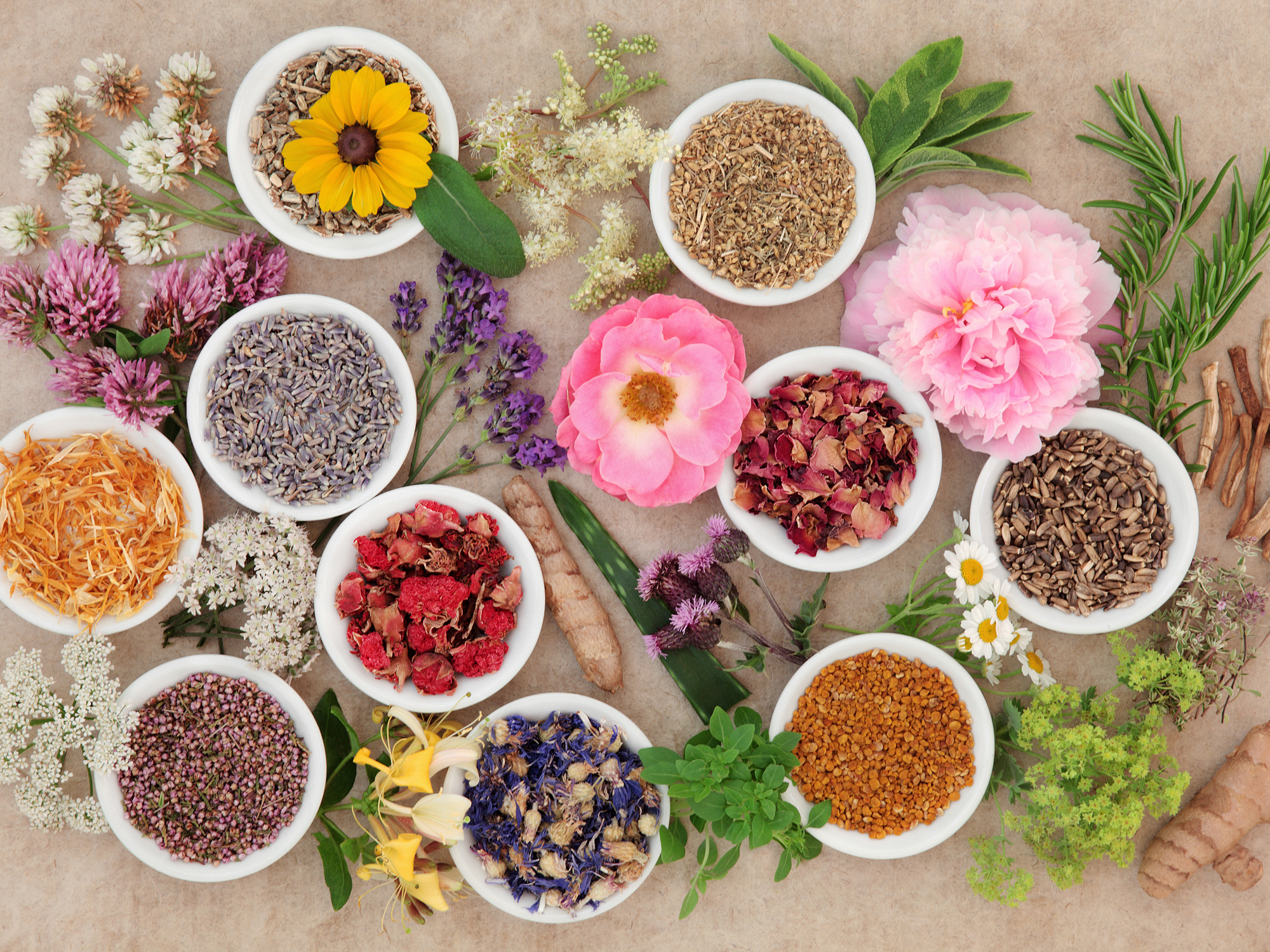 herbal medicine most primitive traditional approach Herbal medicine research and global health: traditional herbal medicine played a prominent market for these products approaches us$ 60 billion 2.