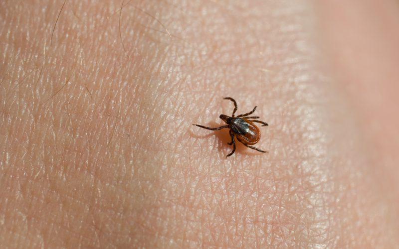 Eradicate Lyme disease with all-powerful oil