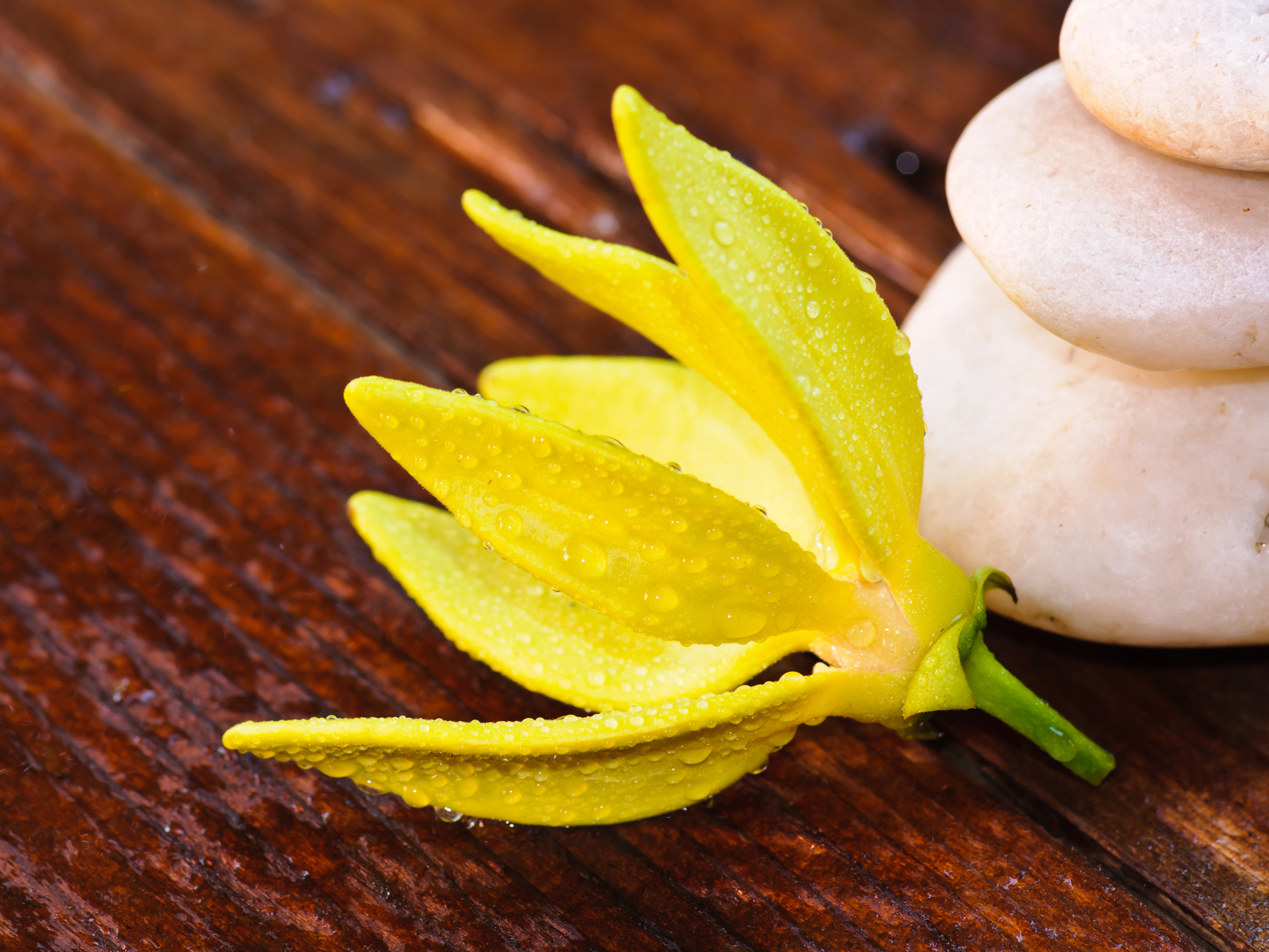 "5 amazing ""bedroom benefits"" of ylang-ylang"