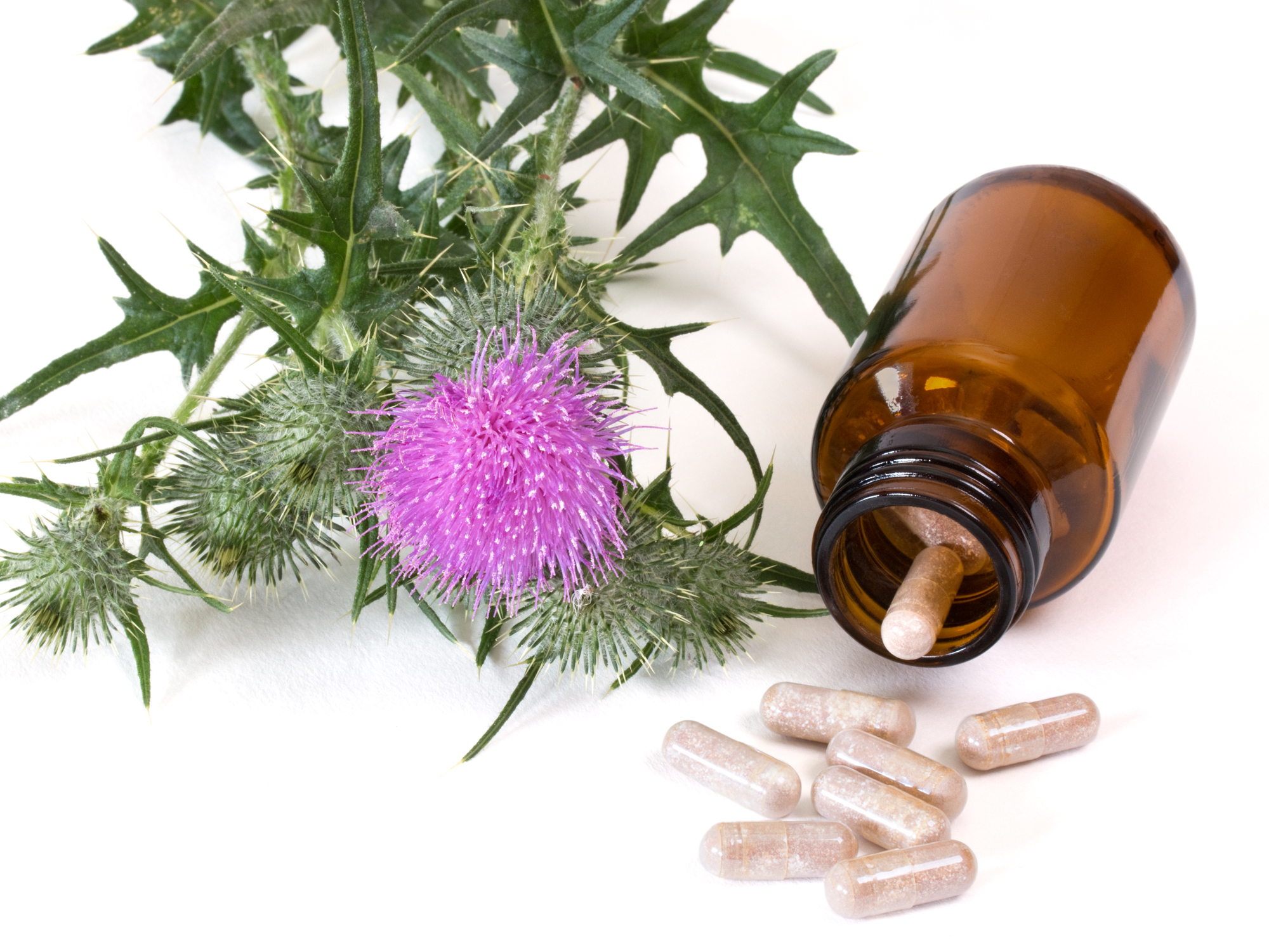 Milking the many benefits of milk thistle