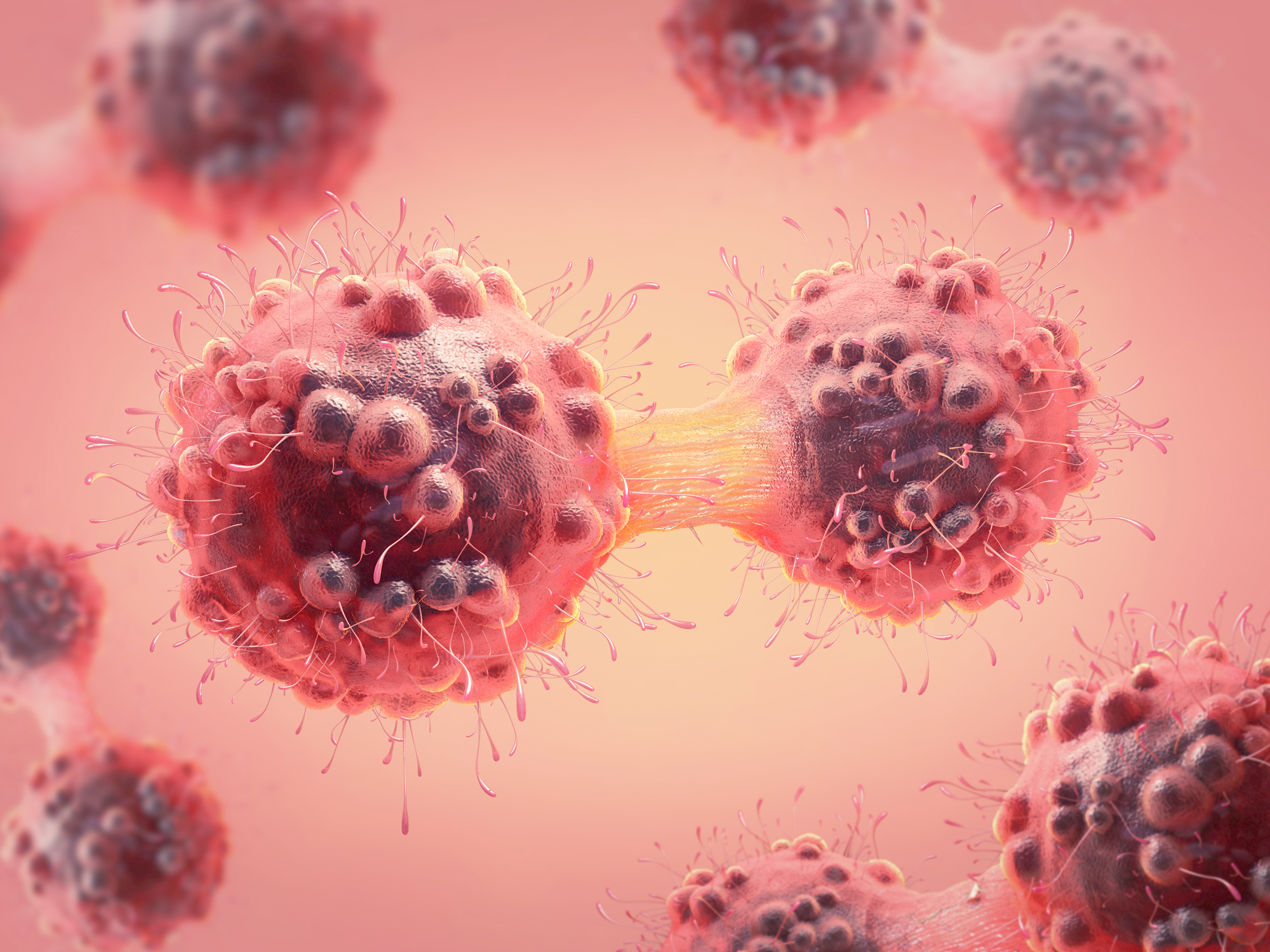Why belly fat fuels cancer growth