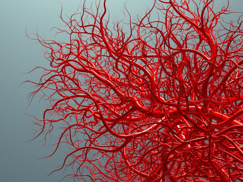 Make Your Blood Vessels Younger To Avoid Heart Attack And Stroke