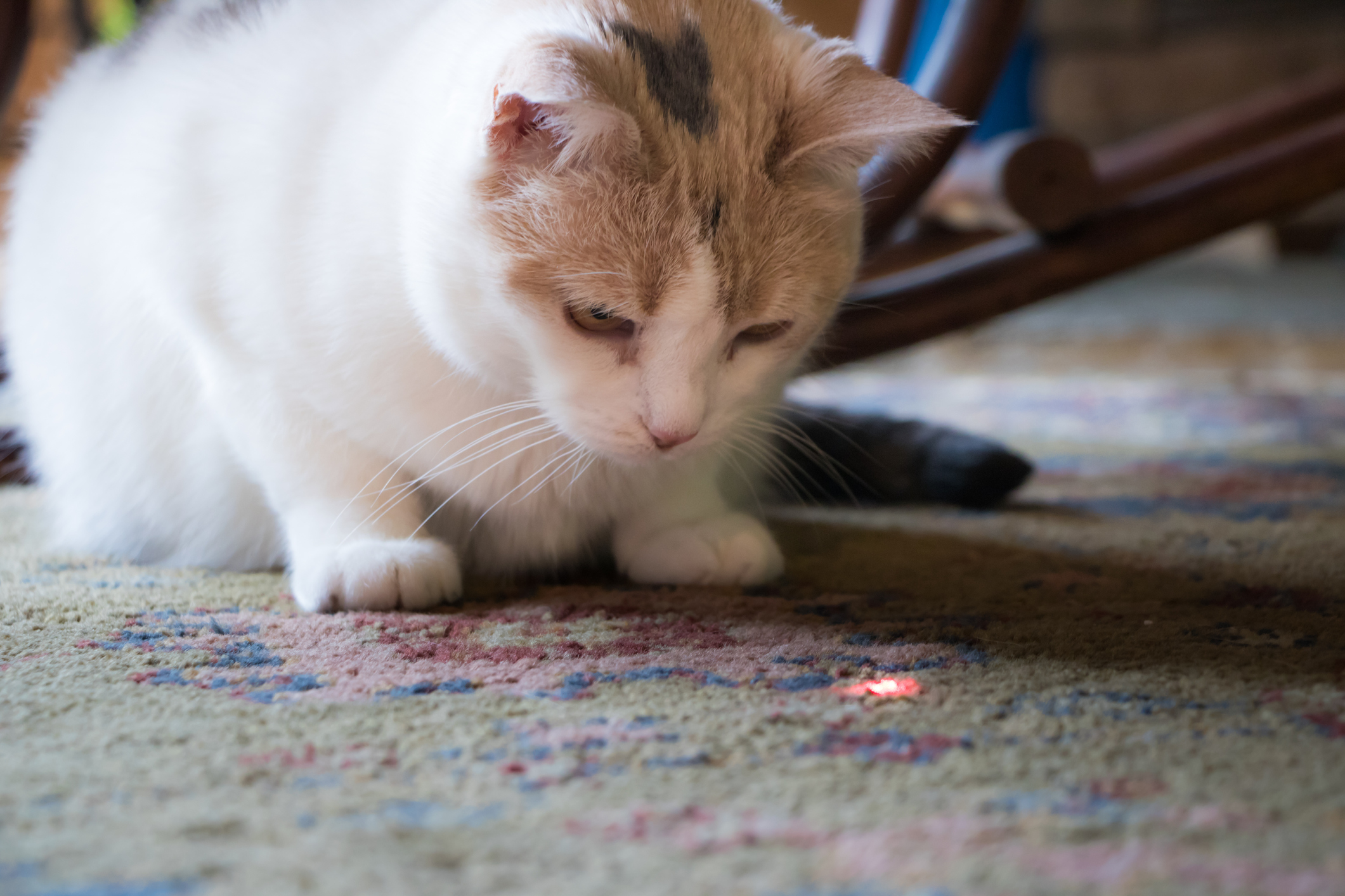 That laser pointer the cat loves to play with can permanently damage your eyes