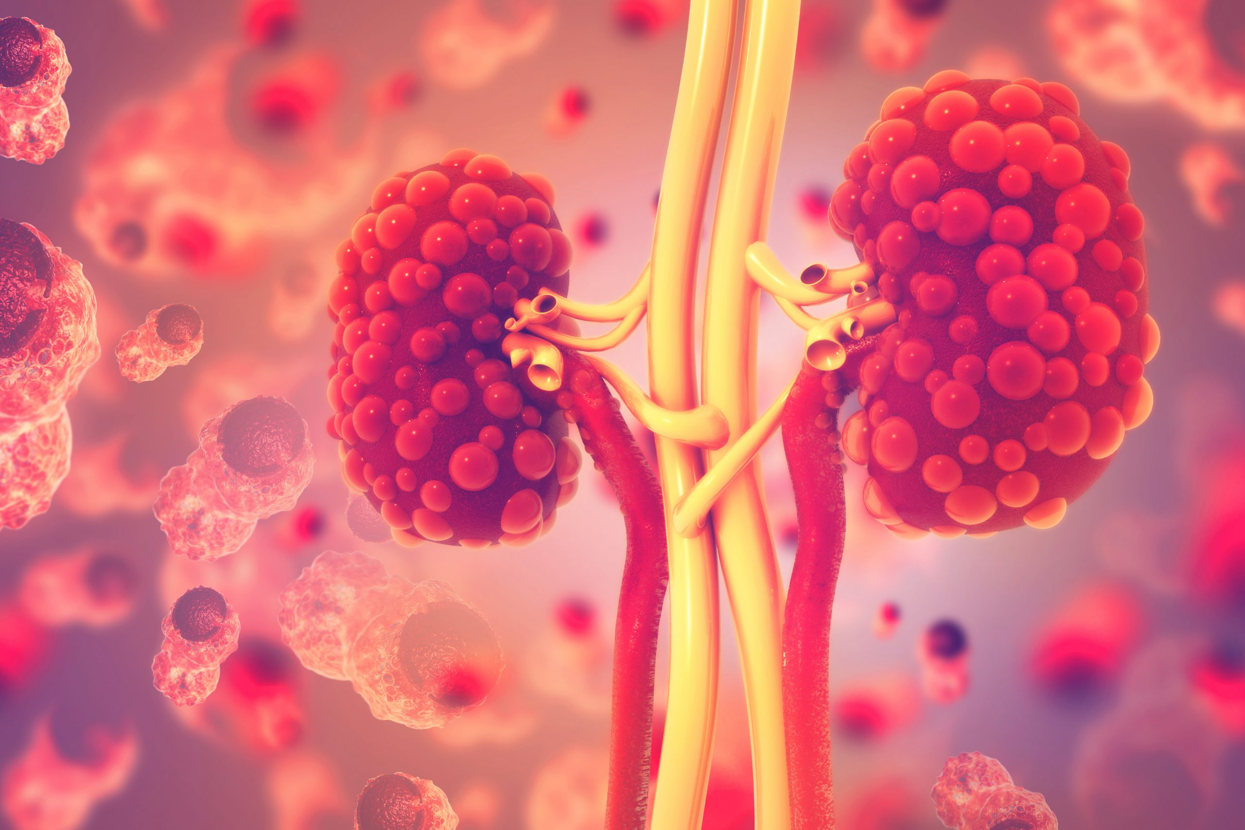 Kidneys carried the second-highest COVID-19 viral load