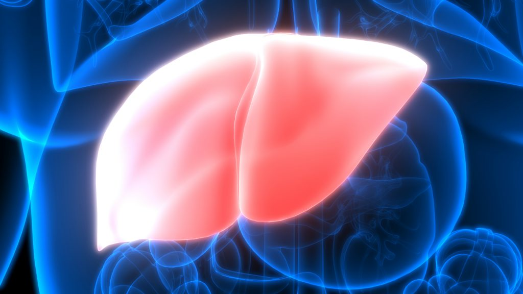 Hops compounds may fight fatty liver